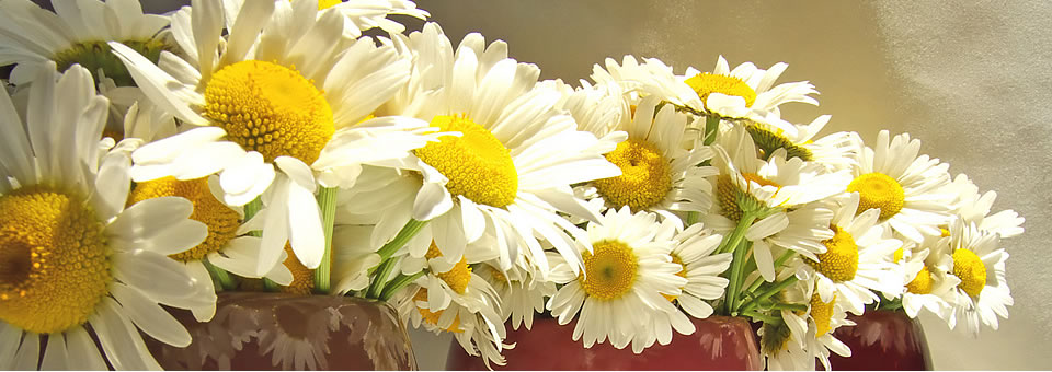 Arranging Your Flowers