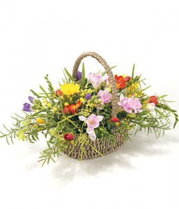 Mixed Freesia Basket